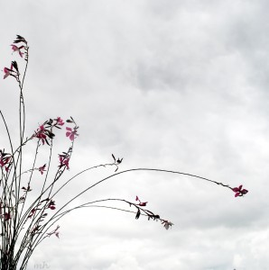 Hoa Buom dep mong manh (31) -