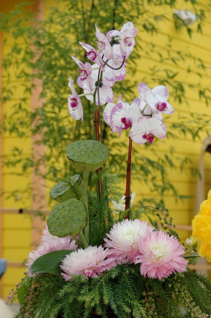 Hoa Cung Duong Chu Phat 2014