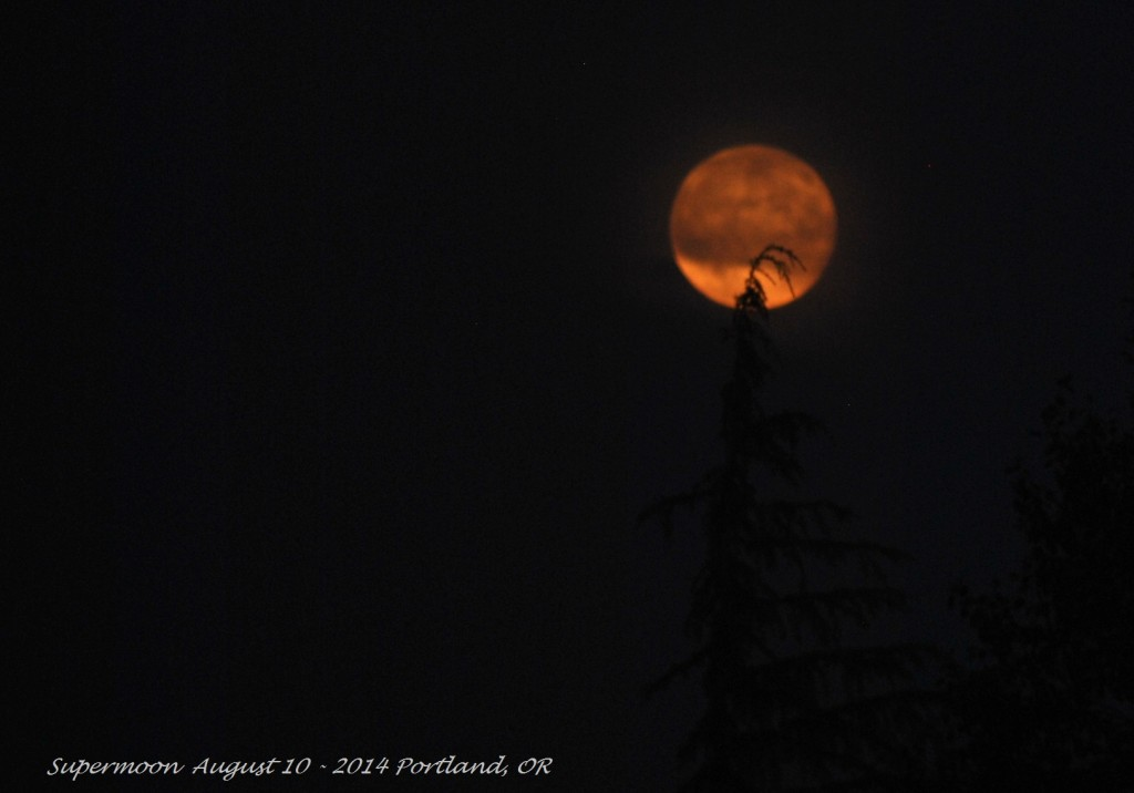 Super Moon August 10 - 2014 (11)
