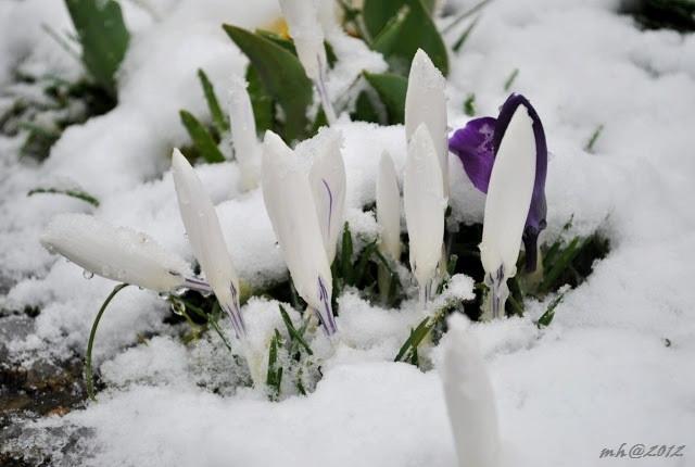 spring-2012-4