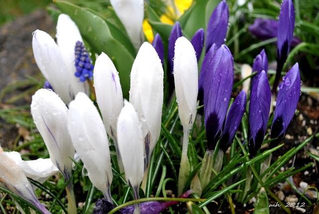 spring-snowfall-2012-19