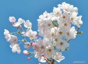 spring-thg-3-2013