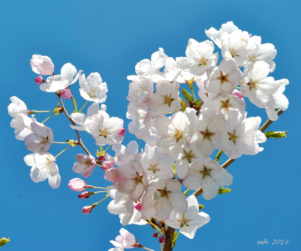 spring-thg-3-2013-485