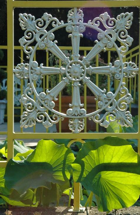 White Lotus at Buu Hung temple 2014