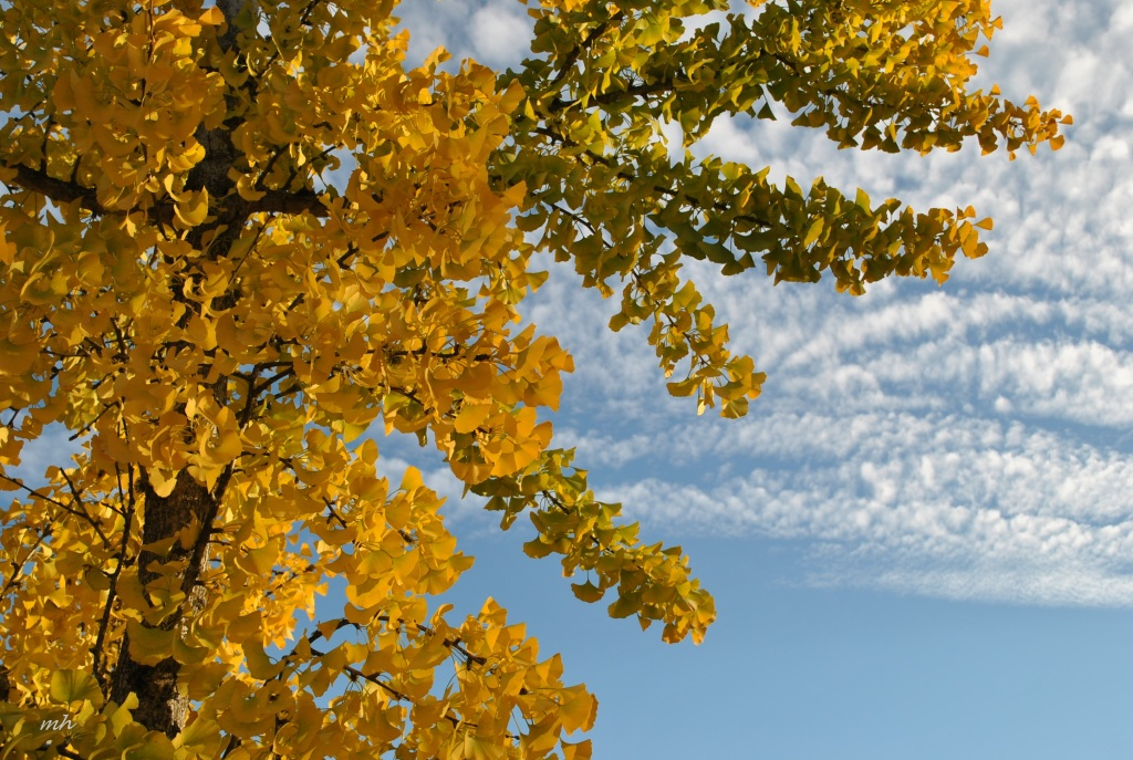 Autumn 2014.. (19)