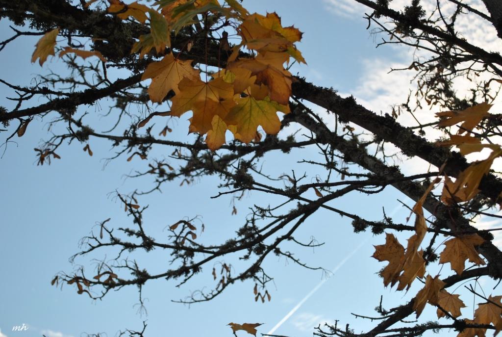 Autumn 2014.. (24)
