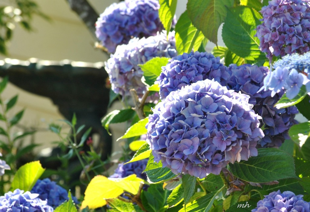 July's flowers 2014 (2a)