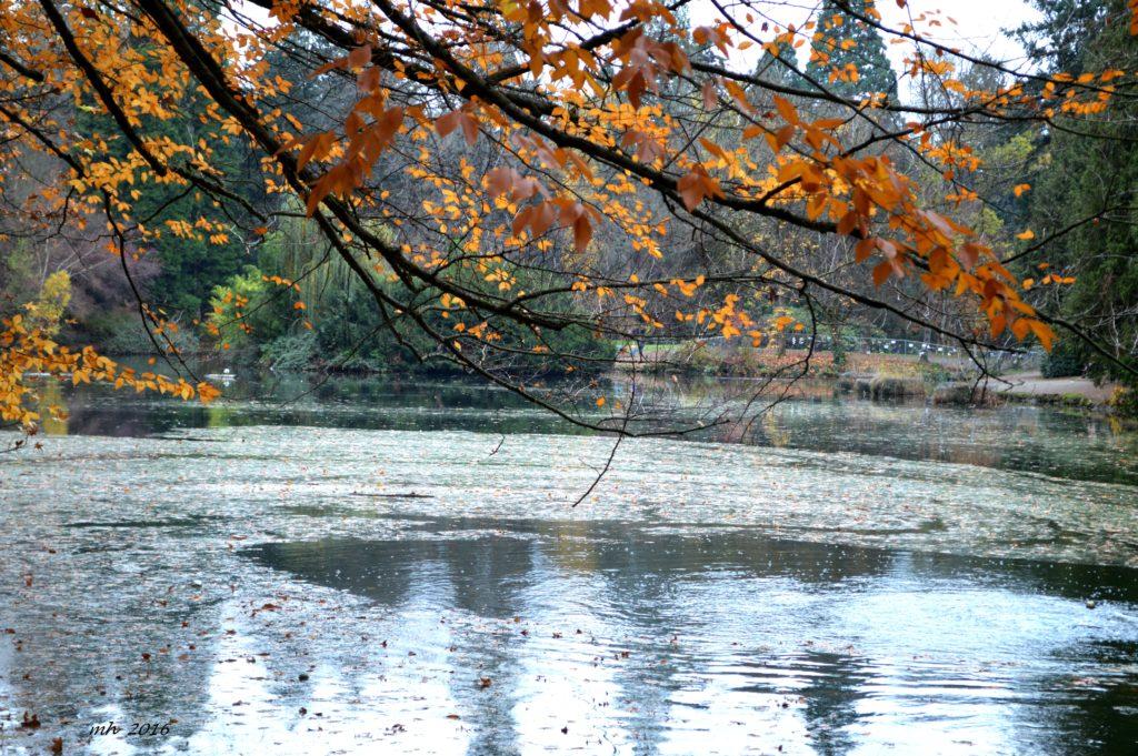 laurelhurst-park-autumn-2016-23