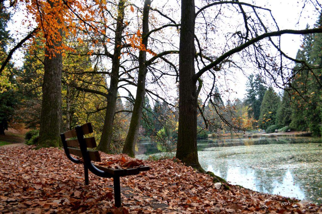 laurelhurst-park-autumn-2016-7
