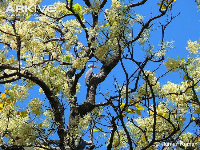 Sala tree 2014 (6)
