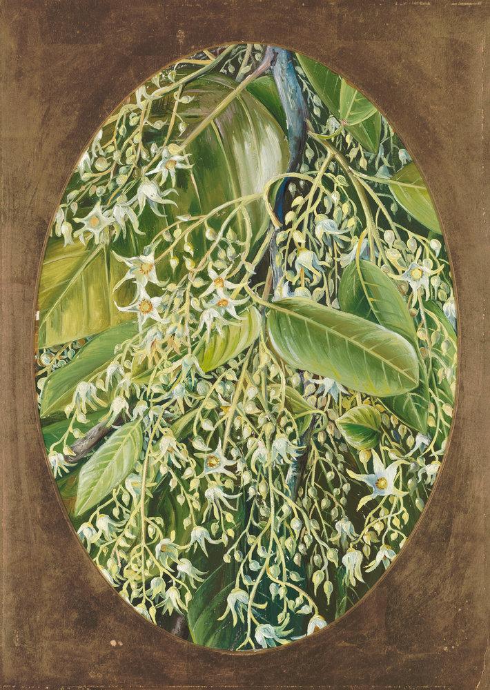 Sala tree (6)