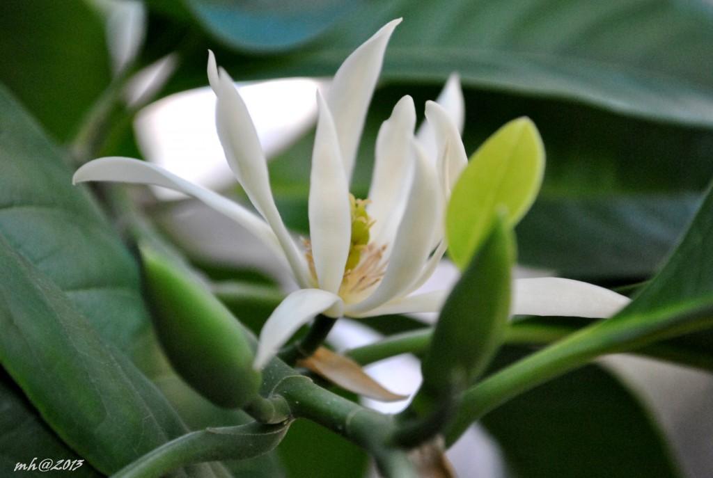 Hoa Ngoc lan 2013