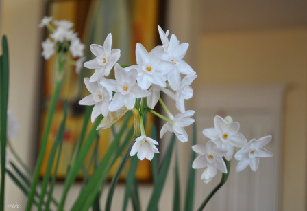 Hoa Thuy Tien (3)