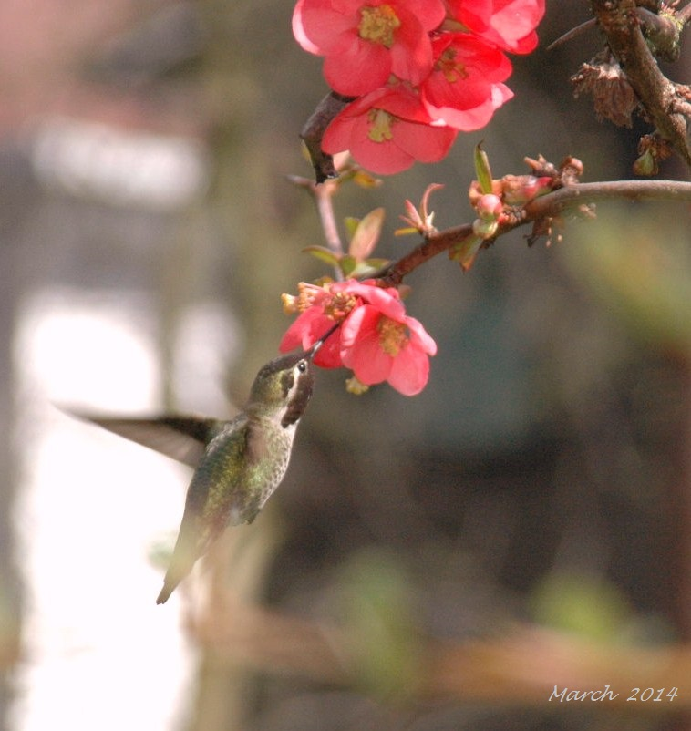 Spring 2014 (14)