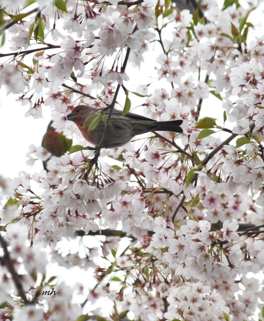 Spring, April - 2014 (12)