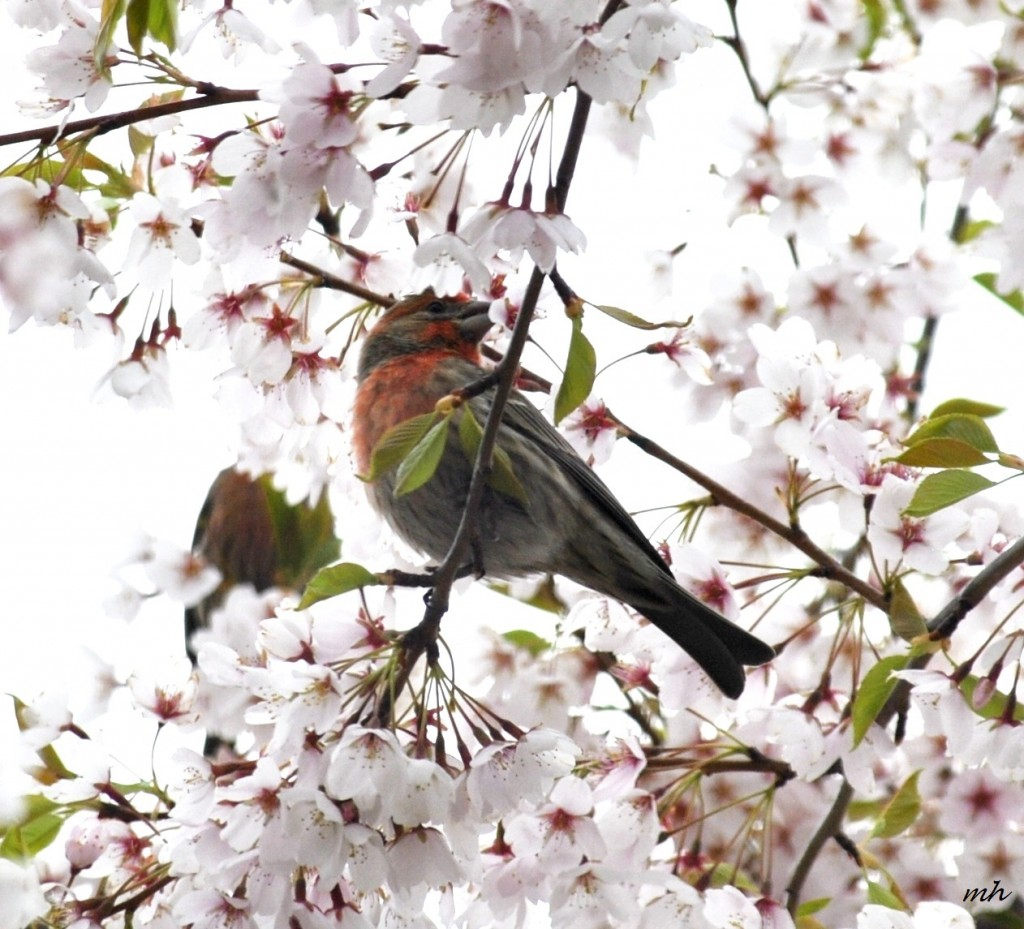 Spring, April - 2014 -8a (1)