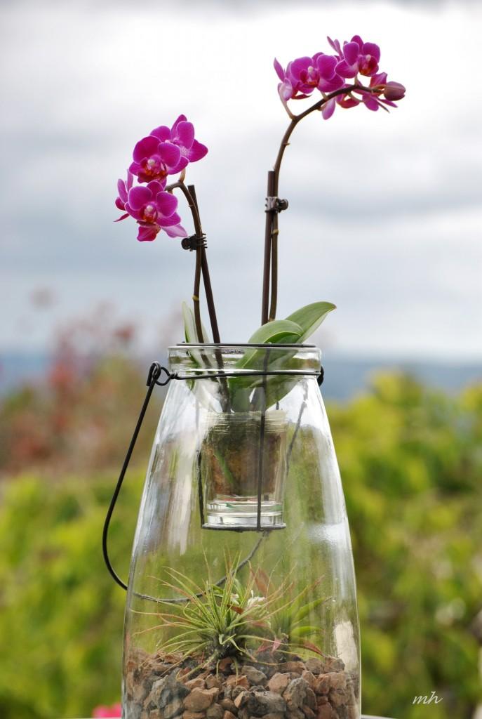 hoa lan & cây không khí