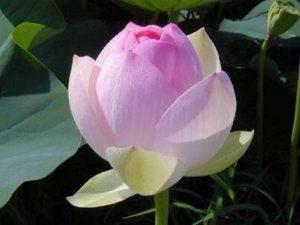 Flower (183)