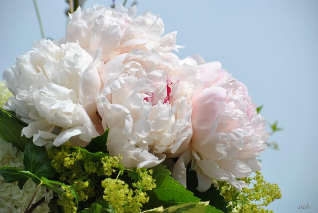 Hoa Mẫu Đơn 2014 (34a) -