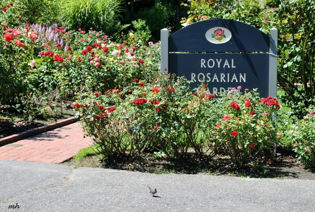 Rose Garden 2014 (296)