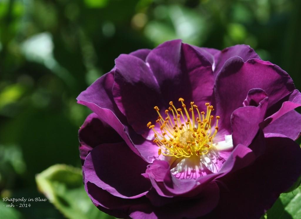 Rose Garden 2014 (369d)