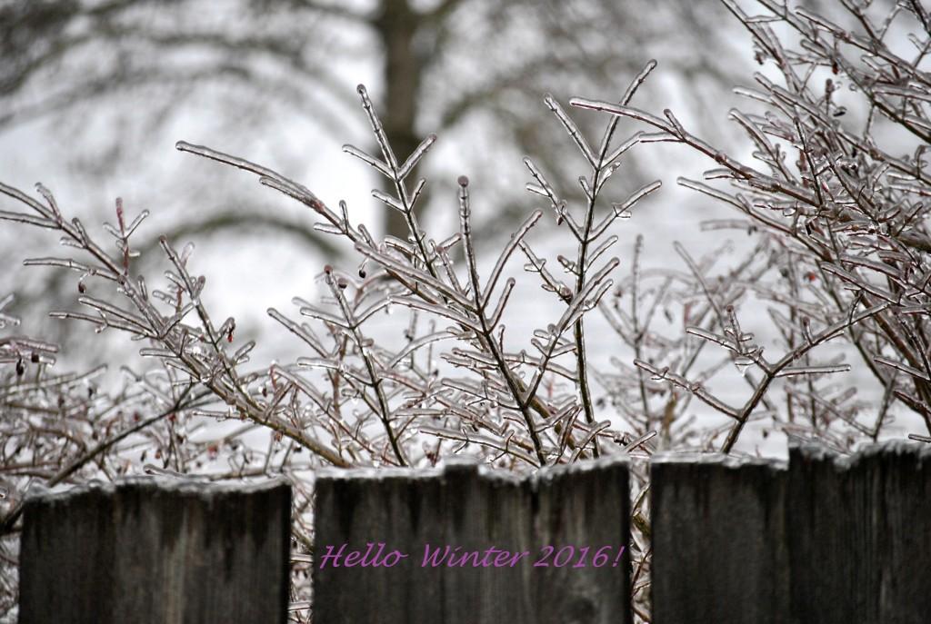 Hello Winter 2016 (1)