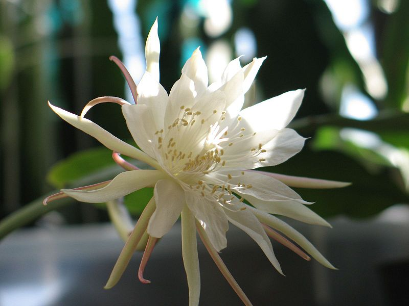 Hoa Quynh (3)
