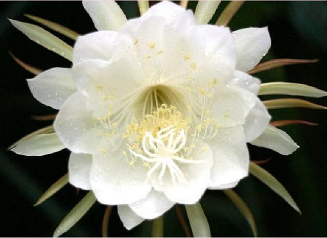 Hoa Quynh (4)