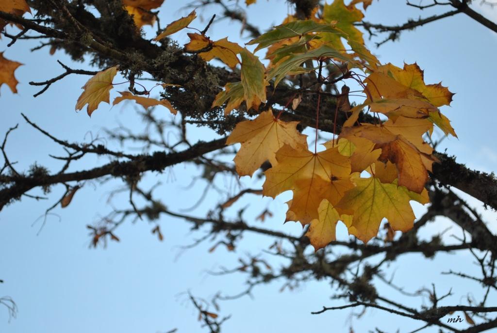 Autumn 2014.. (11)