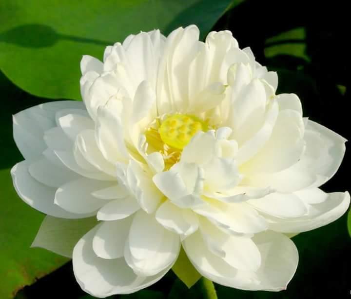 Flower (1986)