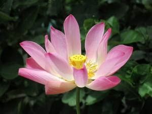 Flower (558)