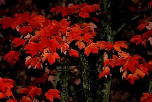 Autumn 2015 (mh) (15)