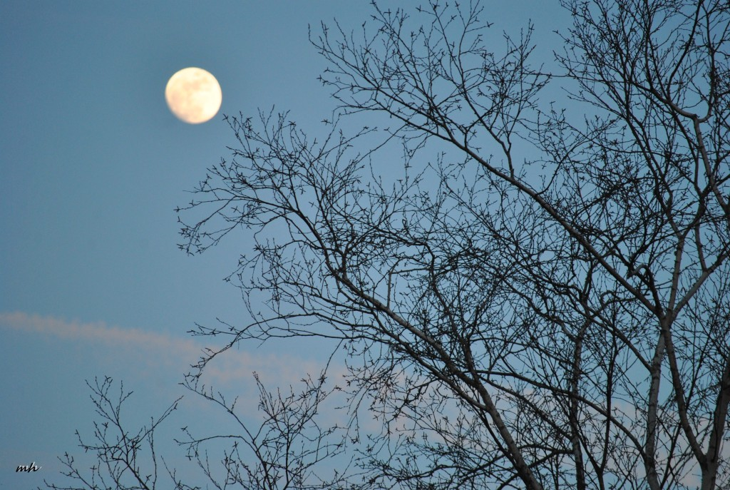 Full Moon Feb 2016 (17)