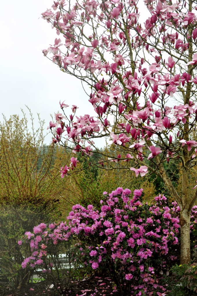 Magnolia 2016 (17)