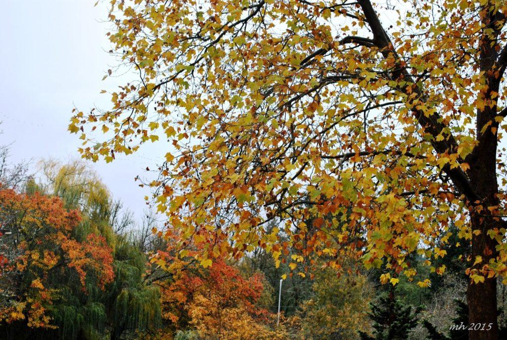autumn-2015-h-26