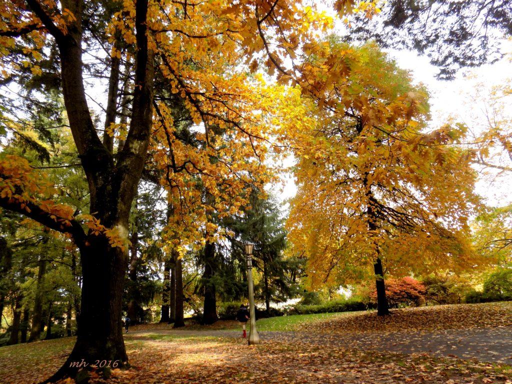 laurelhurst-park-in-portland-2016-3