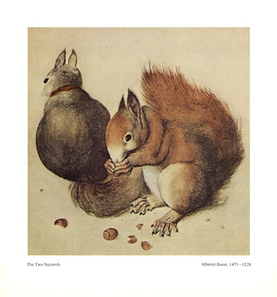 squirrels-c-1512-by-albrecht-durer
