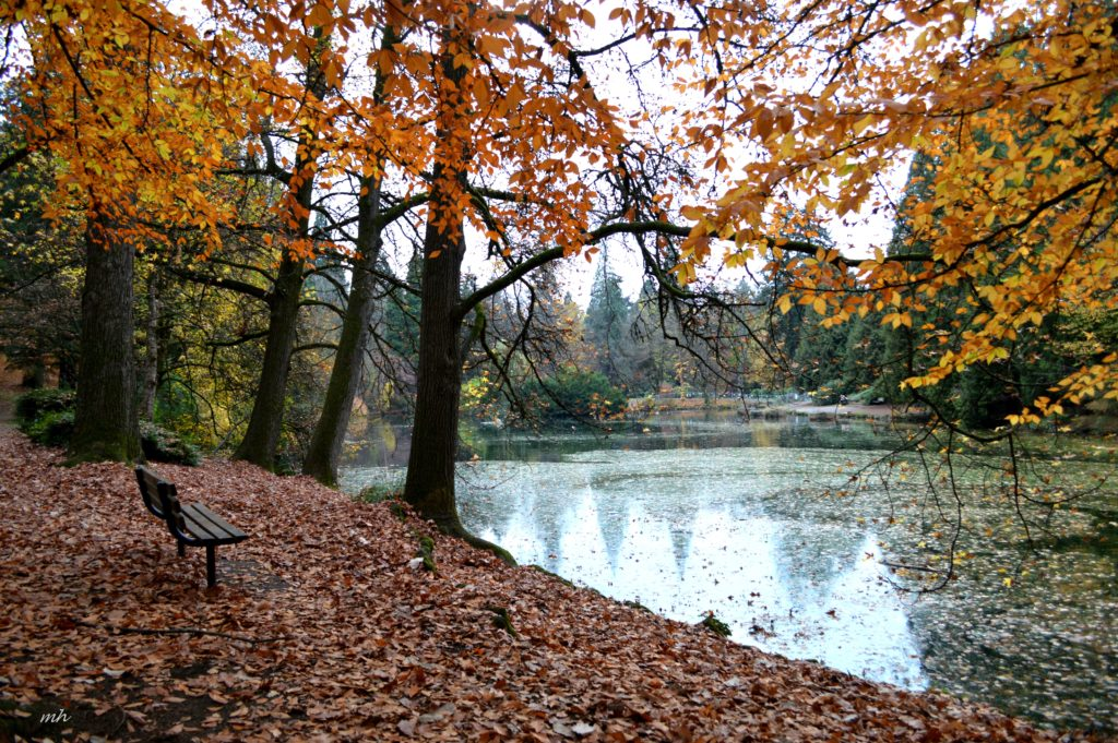 laurelhurst-park-autumn-2016-5